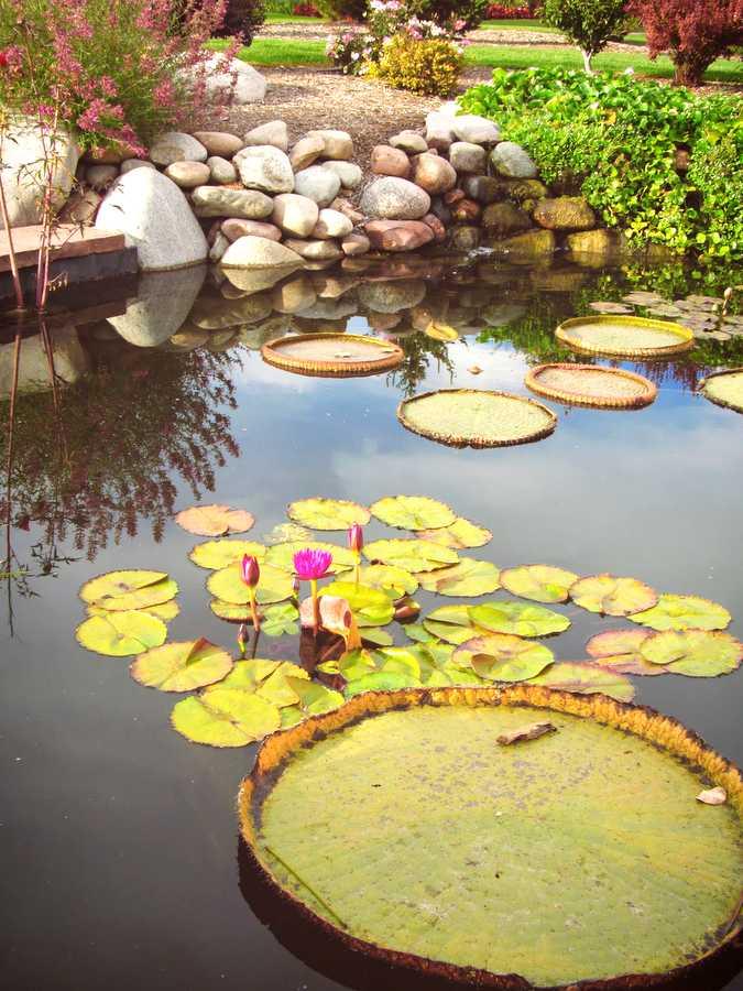 Hudson Gardens pond.