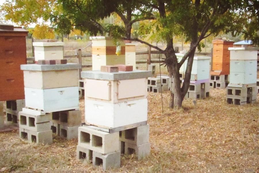 Beehives at Hudson Gardens