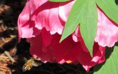 Denver Botanic Gardens Bloom Despite Snowstorm