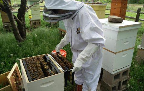Beekeeping: First Year Surprises