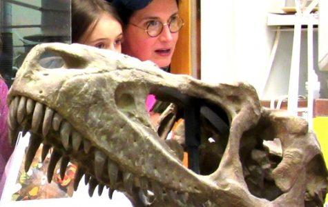 Rare Triceratops Find Arouses Curiosity