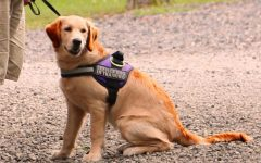Service Dog Awareness Month