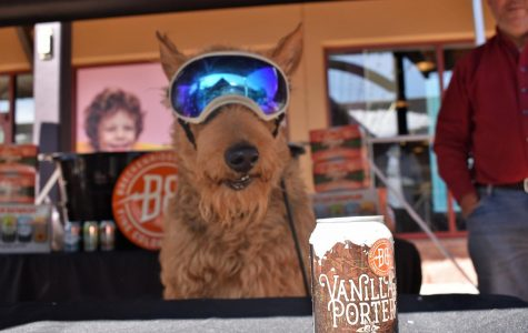 Dog in 'doggles' sits in the shade under the Breckenridge Brewery tent next to a can of their iconic vanilla porter malt on Saturday, Oct. 12, 2019 in Castle Rock, Colo. outlet stores. The Barks & Brews event gave locals an opportunity to shop, listen to live music and sip back a cold one with their furry friends.