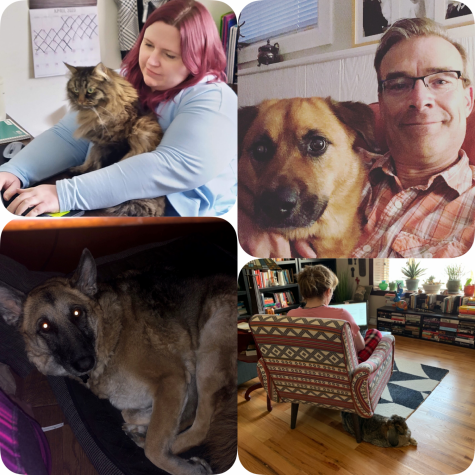 Photo collage of some of the ACC Employees with their pets during quarantine.