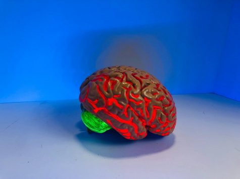 Brain figurine in front of blue backdrop